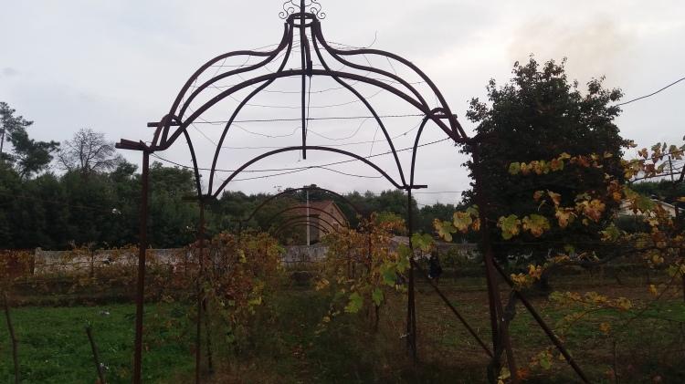Estrutura antiga de suporte da vinha