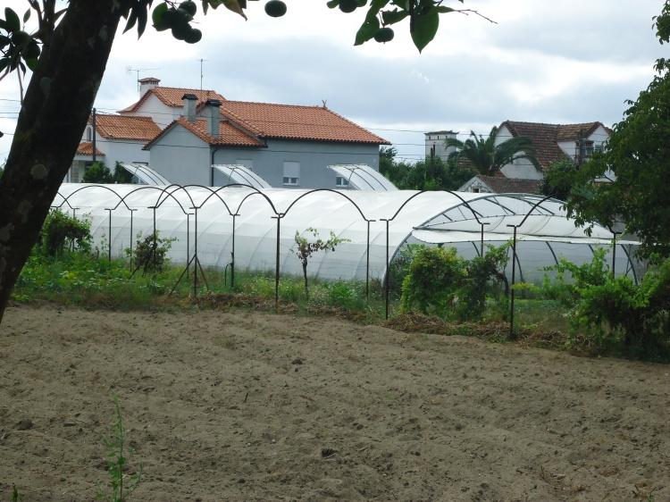 terra de cultivo